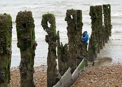 Cooden Beach Breakwater Groyne Posts (Stuart Axe) Tags: uk gb unitedkingdom greatbritain groyne post groynepost groyneposts groynes cooden beach coodenbeach bexhillonsea eastsussex breakwater longshoredrift