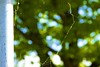 126 - May 06 2015 - Spiderweb (857) (Kristoffersonschach) Tags: day126 day126365 3652015 spiderwebnet365the2015edition 6may15sonya77