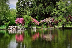 Lake reflections 4 28 2015 (rbdal (Rick Dalrymple)) Tags: lake reflection oregon reflections portland spring nikon rhododendron crystalsprings crystalspringsrhododendrongarden multnomahcounty d7000