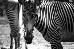 Black & White by Nature
