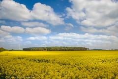 20160505 (micha-63) Tags: clouds bayern gold crazy nikon wolken raps mittelfranken d90 hilpoltstein blauweis