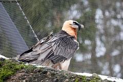 IMG_8225 (u.wittwer) Tags: park zoo schweiz switzerland tiere suisse tierpark heimat arth naturpark goldau widi