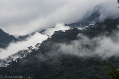 Cordillera escallera (antonsrkn) Tags: trees wild mist mountains peru southamerica nature beautiful misty clouds forest landscape outdoors nikon pretty hiking foggy reserve hills jungle vista nikkor cordillera protected escallera cordilleraescallera