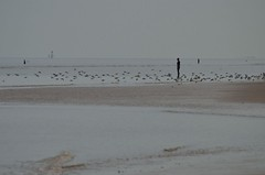 2016 04 15 111 Crosby Beach (Mark Baker, photoboxgallery.com/markbaker) Tags: uk england men beach coast photo spring iron europe european day baker place britain mark united union great eu kingdom indoor cast photograph gb april another sandpiper sir antony gormley crosby merseyside sefton 2016 picsmark