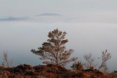Tree (Lezzo22) Tags: scotland greatglen