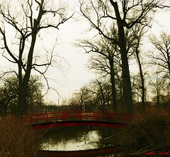 The little red bridge in the dark and scary forest (SCOTTS WORLD) Tags: park bridge trees winter shadow red sky urban usa detail reflection texture water digital america creek river fun island march scary midwest downtown unitedstates angle pov michigan detroit perspective rusty panasonic spooky adventure trail rails modified crusty belleisle urbanexploring urbex motown motorcity 2016