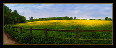 Fields of Gold (Kevin From Manchester) Tags: flowers trees sky panorama clouds fence landscape manchester northwest panoramic lancashire fields hdr canon1855mm canon1100d