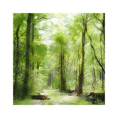 Vert printemps (Yves Lahanque) Tags: nature sigma vert paysage chemin fort