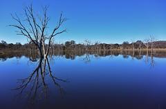The Dam at Mulligans Flat Woodland Sanctuary (~Jek~) Tags: lake reflection water pond dam australia deadtree canberra aus australiancapitalterritory mulligansflat mulligansflatwoodlandssanctuary
