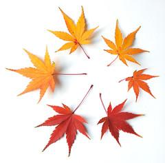 Autumn leaves in Canberra (jani.na) Tags: autumn tree leaves japanese leaf maple herbst canberra blatt bltter baum japanischer ahorn