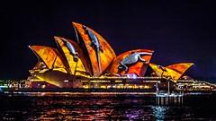 Vivid Sydney-42