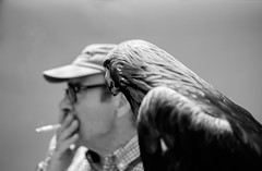 Fumando (MigueR) Tags: espaa blancoynegro fuji toledo desenfoque aguila castillalamancha cetrera eltoboso xt1 jornadascervantinas