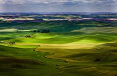 Palouse County, Washington, USA (klauslang99) Tags: county usa west nature colors landscapes washington north naturalworld palouse northamerican klauslang