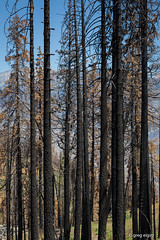 Rough Fire (Will shoot for lenses) Tags: trees summer vacation flickr july lightroom 2016 humelake eigsti topazadjust topazdenoise canoneos5dmarkiii ef70200mmf28lisiiusm