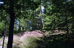DSC_0004-1 (Chaumurky) Tags: h garden