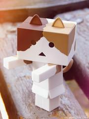 DSCN06655 (sweet_orange) Tags: cat kitten toy adventure danbo