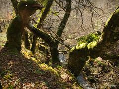 Big Burn Walk Golspie Scotland 2 (Labes59) Tags: uk scotland highlands europe walks unitedkingdom sutherland a9 golspie thehighlands woodlandwalks
