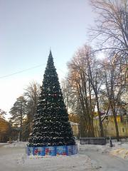 NewYearTree1 (Tiny Gremlin) Tags: newyeartree новогодняяёлка морозисолнце 06012015 самыйхолодныйденьзимы
