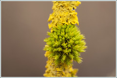 20150329. Spring. Moss. 3231 (Tiina Gill (busy)) Tags: green nature yellow moss spring estonia lichen