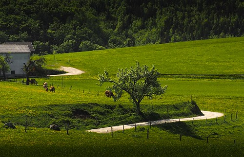 Countryside - somewhere in east Austria