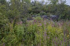 Hog's Back Park, summer 2015 (lezumbalaberenjena) Tags: park parque ontario river back ottawa falls hog parc rideau hogsback hogs