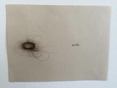 Dibujo orgnico (lauramurillom) Tags: drawing disegno dessin dibujo pelo hair