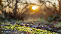 Mystic forest sunset... (.: mike | MKvip Beauty :.) Tags: sunset orange green nature yellow closeup backlight forest 35mm germany spring europe bokeh availablelight sony naturallight manual alpha karlsruhe sunsetlight mystic swirly backlighting mth wideopen shallowdof f13 meopta vintagelens manuallens berghausen manualexposure extremebokeh smoothbokeh sonyalpha bokehlicious projectionlens projectorlens manualfocusing swirlybokeh 13 meostigmat vintageprime beyondbokeh emount mkvip manualondigital sonyalpha6000 ilce6000 sonyilce6000 meoptameostigmat sony6000 6000 emountconversion meoptameostigmat35mm13
