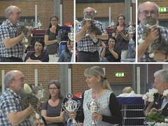 Bastian does it again... (Finn Frode (DK)) Tags: show pet cats animal cat canon denmark indoor bis mixedbreed housecat catshow bestinshow digitalvideo bastian hvidovre domesticshorthair huskat racekatten fif