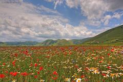 Explosion of flowers (Angelo Nori) Tags: flowers italy clouds italia nuvole fiori paesaggi castelluccio angelonori