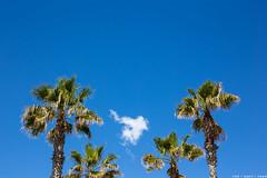 Barceloneta (like / want / need) Tags: barcelona beach spring spain catalonia barceloneta blueskies