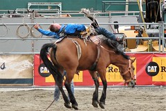 The Cowboy shows Y'all how its done! (auntiekelliephotography) Tags: canada bareback cowboy bc rodeo cloverdale bronc 2016