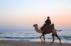 Evening camel ride on the beach in Gaza. (TeamPalestina) Tags: sunset reflection heritage beautiful sunrise canon landscape hope landscapes photo am amazing nice nikon photographer natural sweet live palestine innocent comfort blockade freepalestine palestinian occupation
