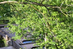 Allerheiligen I (tillwe) Tags: tree blackforest tillwe allerheiligen oppenau 201605 norschwarzwald hochzeitsfeierjd