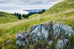 Transpression (Kirk Lougheed) Tags: california usa landscape spring unitedstates outdoor mttam marincounty tamalpais mounttam mounttamalpais bolinasridge mttamalpais mounttamalpaisstatepark
