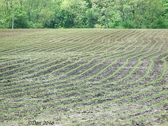 Planting Under the Influence (Picsnapper1212) Tags: ohio spring corn cornfield farming rows crop agriculture planting dui warrencounty