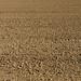 topsoil texture. marysville, ca. 2015.