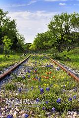 Kingsland Railroad Tracks 2015