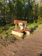 Along the Santa Fe River (suenosdeuomi) Tags: dog newmexico santafe bench trail sumo panasoniclumixdmcfz35