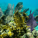 Glover's reef snorkle shots