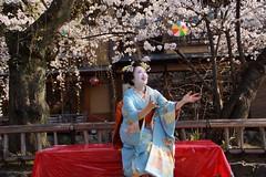 (nobuflickr) Tags: japan kyoto maiko geiko        gionkoubu  20150331dsc06072