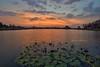 Taman Tema Tasik Darul Aman Sunset (Shamsul Hidayat Omar) Tags: sunset lake tourism water landscape photography high interesting nikon scenery lily dynamic places scene malaysia omar range hdr taman kedah aman tasik tema hidayat darul greatphotographers shamsul jitra photoengine oloneo d800e
