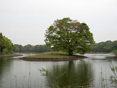 P1560086.jpg (Rambalac) Tags: water japan pond asia вода пруд tōkyōto япония tachikawashi азия lumixgh4