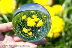 Die Welt in der Kugel (spotterblog) Tags: light reflection glass silhouette mystery ball globe shiny hand crystal background object natur feld sphere translucent transparent spiegelung glas glaskugel lwenzahn