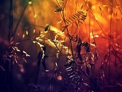 Nature (Julia Delgado Photography) Tags:
