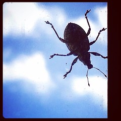 Buggy on the window! (Lette Moloney) Tags: square squareformat hudson iphoneography instagramapp uploaded:by=instagram