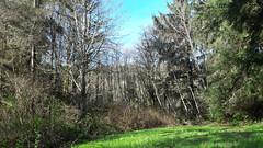 20160331_092039 (ks_bluechip) Tags: creek evans trails preserve sammamish usa2106