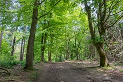 New trails found (Jon) Tags: sky plant field grass bike bicycle wheel landscape cheshire outdoor seat sony may vehicle bikeride grassland plain rockhopper delamere 2016 specilized rx100 sonyrx100