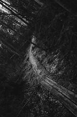 Dark Paths (skullbone76) Tags: blackandwhite halloween nature danger finland landscape scary gothic goth fantasy mysterious horror macabre forests kuopio