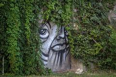 Budapest (Alvaro Lovazzano) Tags: planta helecho face canon europa europe hungary cara budapest graffitti viso rostro hungria pelo t3i enredadera danubio capelo facia