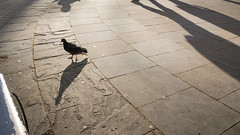 (Alex Ho Photography) Tags: london unitedkingdom   ricohgr2 nienyihophotography